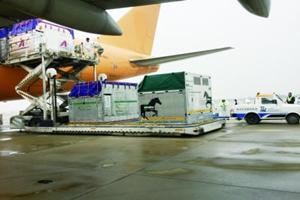 亚马逊空运海运